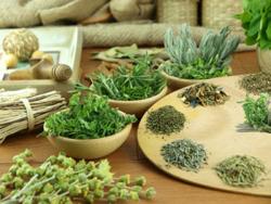 травяные сборы при повышенной кислотности желудка